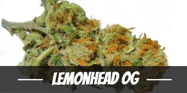 Lemonhead OG Strain Review